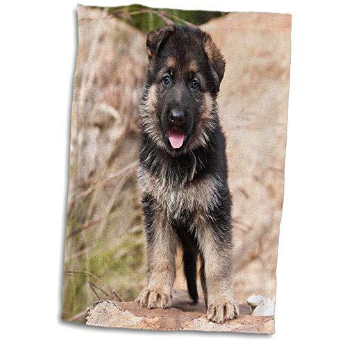 Symple Stuff Dinardo German Shepherd Dog Standing on a Boulder Hand Towel from Symple Stuff