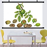 kitchen 67 brunch Gzhihine Wall Scroll Posterrealistic illustration of walnut tree juglans regia with a brunch with fruits male and female ,Wall Art Paiting on Canvas 67