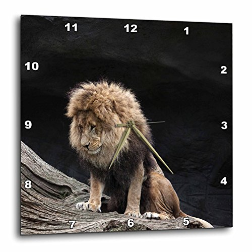 lion pics - 1