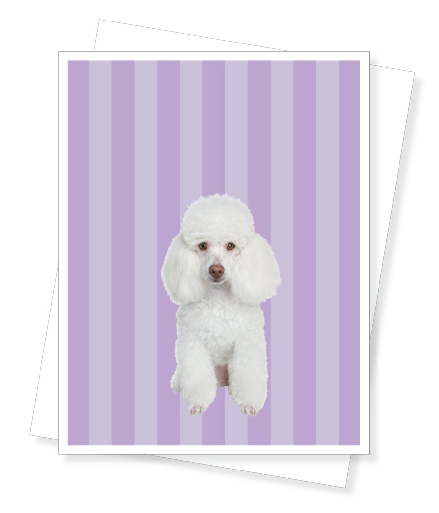 Birthday Poodle Le Cake Birthday Greeting Card