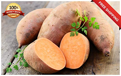 (20pcs Sweet Potato Seeds Plants Fruit Vegetable Batata Organic Bonsai Garden DIY)