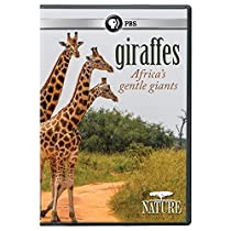 NATURE: Giraffes: Africa's Gentle Giants DVD  Directed by n/a