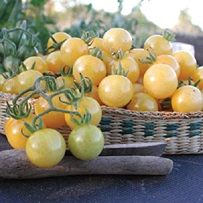 Heirloom White Currant Tomato 25 Seeds by AchmadAnam : Garden & Outdoor