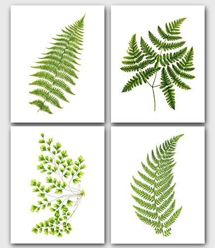 Botanical Ferns, Set Of 4 Prints, Green Plants, 8 x 10 Inches, Unframed