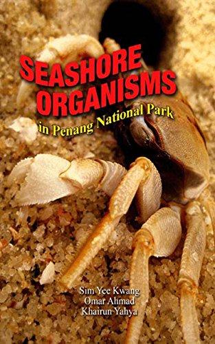 Seashore Organism in Penang National (Montipora Coral)