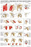 #5: LAMINATED Anatomy and Injuries of the Shoulder Poster - Shoulder Joint Anatomical Chart