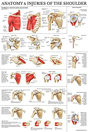 Laminated Anatomy And Injuries Of The Shoulder Poster Shoulder