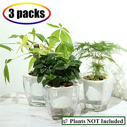 Self Watering Planter , FENGZHITAO African Violet Pots, Clear Plastic Automatic-Watering Planter Flower Pot Square Plant Pot for All House Plants, Succulents, Herb, African Violets (3 Packs Small) African Violet Pot Pots
