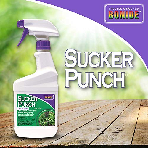 Bonide (BND2761) - Ready to Use Sucker Punch, Stop Suckers Sprouting from Roots and Pruning Cuts (16 oz.) (Best Way To Kill Roots)
