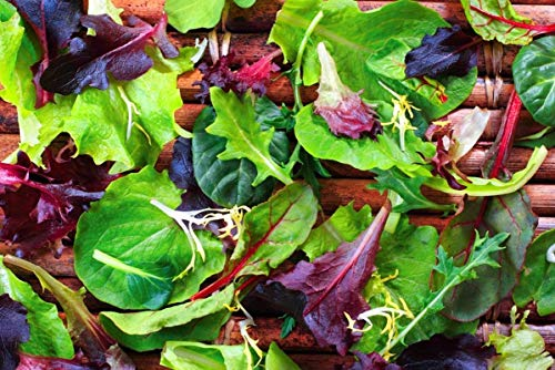 Mesclun Blend Lettuce & Greens Mix Seeds (20 Seed Pack)