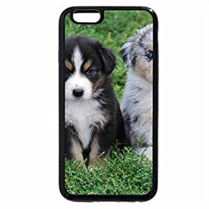 iPhone 6S / iPhone 6 Case (Black) Australian shepherd puppies