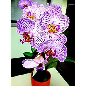 Gifts Delight Laminated 24x32 inches Poster: Orchid Flower Nature Plant Floral 91
