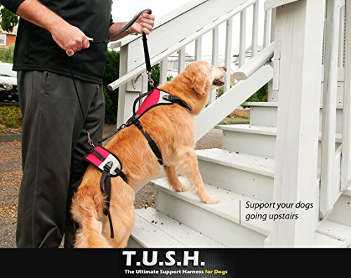 TopDog Health– The Ultimate Support Harness for Dogs (T.U.S.H) – XLarge - Helps Supports Older Dogs Struggling to Get Around or Dogs Recovering from Surgery – Created by a Veterinarian by TopDog Health (Image #3)