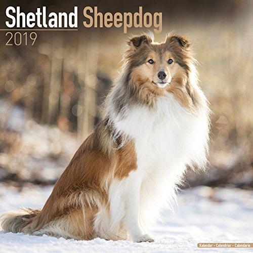 Shetland Sheepdog Calendar - Dog Breed Calendars - 2018 - 2019 Wall Calendars - 16 Month by Avonside