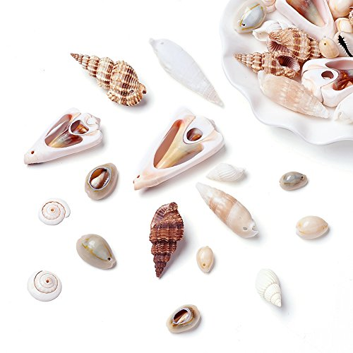 Scallop Shell Beads (Kissitty 500 Grams Natural Mixed Style Beach Cowrie Sea Shell Beads with Holes 0.63~1.77