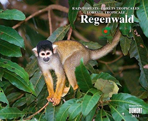 Regenwald, Fotokunst-Kalender 2012: mit OroVerde
