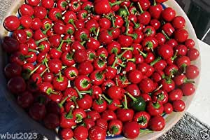 CHERRY BOMB HOT PEPPER ~50 SEEDS,Great for Pickling,Canning, And Stuffing