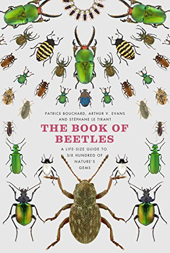 the-book-of-beetles-a-life-size-guide-to-six-hundred-of-natures-gems