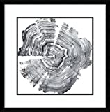 Amanti Art Framed Art Print 'Tree Ring Abstract IV' by Ethan Harper: Outer Size x 23'' 23x23