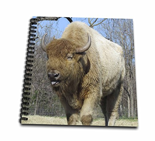 (3dRose db_50410_2 American Bison-Buffalo-Memory Book, 12 by 12-Inch)