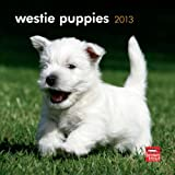 West Highland White Terrier Puppies 2013 7X7 Mini