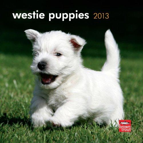 Download West Highland White Terrier Puppies 2013 7X7 Mini PDF