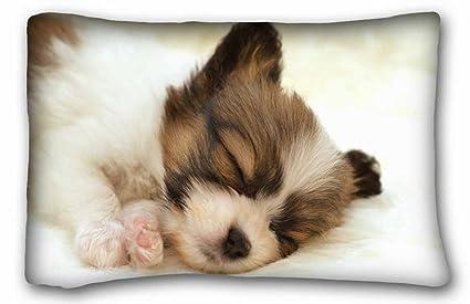 Amazoncom Custom Characteristic Animals Papillon Puppy Dog Sleep