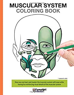 muscular system coloring book now you can learn and master the muscular system with ease - Human Body Coloring Book