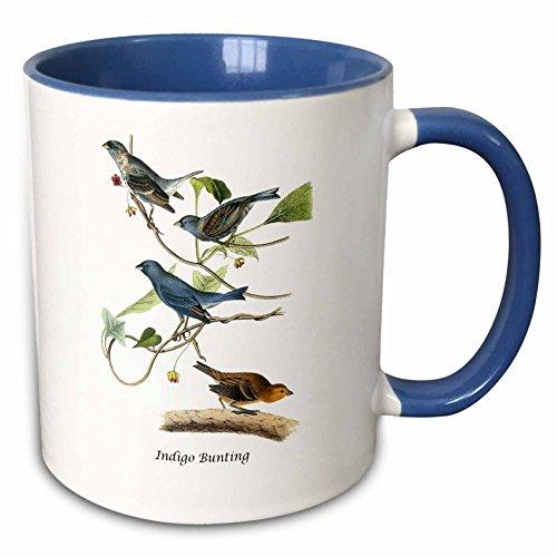 3dRose BLN John James Audubon Collection - Indigo Bunting by John James Audubon - 15oz Two-Tone Blue Mug ()