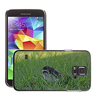 Cas Coq Case Cover // M00148042 Nido de Pájaro Joven Schwalbe heces // Samsung Galaxy S5 S V SV i9600 (Not Fits S5 ACTIVE)