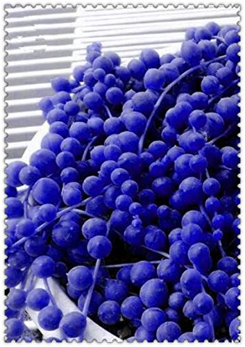 Shopvise 200 Pcs Rainbow Pearl Chlorophytum Beads Garden Succulentas Absorb Formaldehyde Potted Indoor Air Purification: 6