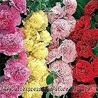 Zoomy Far: Maison et Jardin, en Plein air Fleur 100 pcs/sac graines de Couleur Rose trémière mixtes