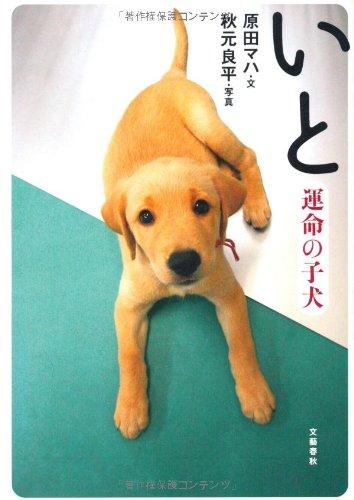 いと―運命の子犬