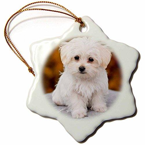 Maltese Rose - 3D Rose Maltese. Cute Little Puppy Snowflake Ornament, 3