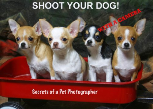 Shoot Your Dog with a Digital Camera Secrets of a Pet Photographer