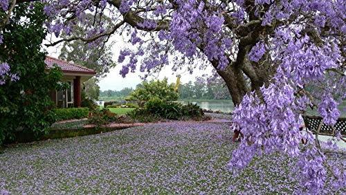 Rompecabezas De 1000 Piezas Árboles Flor Jardín Arbol Flora Hobby Home Decoration Diy: Amazon.es: Hogar