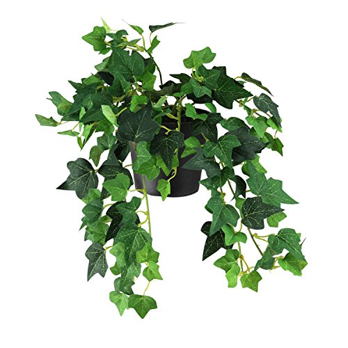 "- Northlight 15"" Green and Black Potted Spring Artificial Ivy Bush"