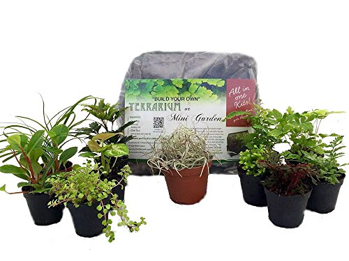 Hirt S Terrarium Kit With 5 Terrarium Plants 5 Ferns Buy Online