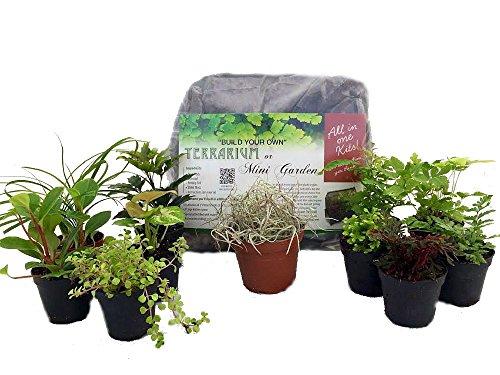 with 5 Terrarium Plants, 5 Ferns ()
