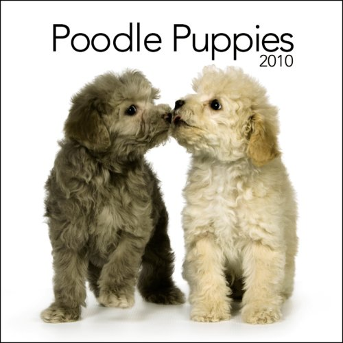 Poodle Puppies 2010 Mini Wall