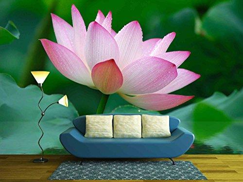 Close up of beatiful pink lotus