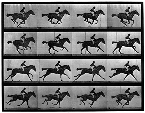 Muybridge Locomotion Nphotographic Study Of 16 Frames Of Racehorse Annie G Galloping By Eadweard Muybridge In C1887 Poster Print by (18 x 24)