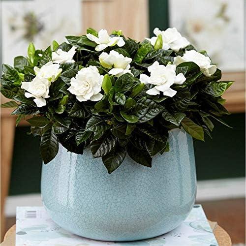 piante e fiori profumati vendita