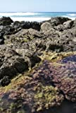 New Zealand Seaweeds an Identification Guide, Wendy Nelson, 0987668811