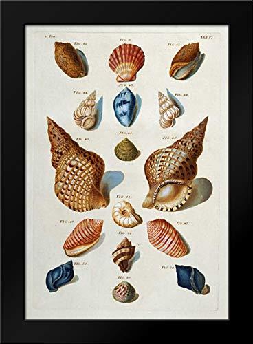 (A Selection of Seashells Framed Art Print by Regenfuss, Franz Michael)