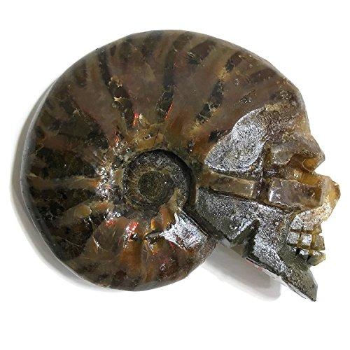 MUZEE calavera mar caracol Arco Iris Ammonite caracola 50mm 41g Cuarzo Natural tallada a mano para decoración Reiki...
