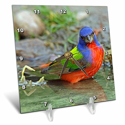 3dRose dc_94400_1 Texas, Painted Bunting Male Bird-US44 BJA0141-Jaynes Gallery-Desk Clock, 6 by 6-Inch