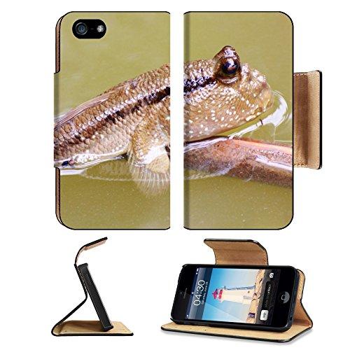 Mudskipper Fish - 8