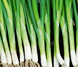 Parade Bunching Onion Scallions 200 Seeds (Organic) UPC 647923989540