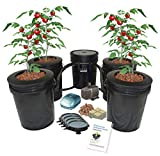 Hydroponic Recirculating Deep Water Culture System with Root Spa. (4) 5 Gallon Buckets + 1 Control